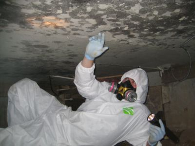 Mold Removal Amp Clean Up Foothills Environmental Inc